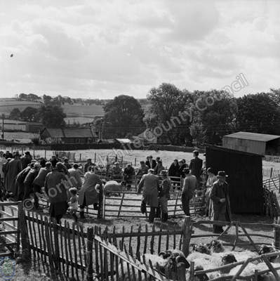 Sheep Sale, Malham Sale, 1964